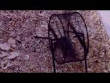 дикая полевая мышка учит детей бегать в колесе